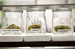 TIMES FILE PHOTO - Tigard City Councilors will decide this week how marijuana retail shops and medical dispensaries will be regulated within the city