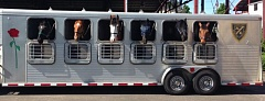 COURTESY PORTLAND POLICE BUREAU - The horses of the Portland Police Bueau's Mounted PAtrol Unit are now commuting to work from Lake Oswego.
