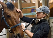 REVIEW PHOTO: VERN UYETAKE - Portland Police Bureau trainer Jennifer Mack grooms Olin before a ride at the Lake Oswego Hunt Club.
