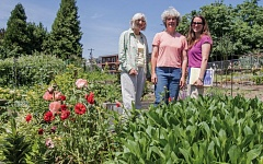 PORTLAND TRIBUNE: JONATHAN HOUSE - Helen Ost, Barbara Knapp and Jennifer Vitello are hoping the Portland Parks & Recreation will purchase the Johns Community Garden from the Water Bureau.
