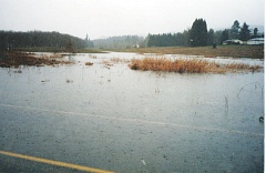 COURTESY PHOTO - A photo taken in 1999 shows water accumulated over Dutch Canyon Road in Scappoose that feeds into a nearby wetland. Some say the continuation of a housing subdivision will destroy water flow to the wetland.