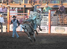 JIM BESEDA/MOLALLA PIONEER - Flying Five Rodeo's Spring Lilly won this contest with saddle bronc ridere Caleb Nicols of Priest River, Idaho during Thursday's 92nd Molalla Buckeroo PRCA Rodeo.