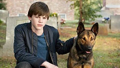 SUBMITTED - A boy and his dog - While the film could easily have fallen into         the unfortunate fate of many boringly predictable and unoriginal family adventure movies, 'Max' wisely does not dumb down its story for the audience and manages to pull off an engaging and maybe even a little bit heartwarming story.