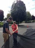 PAMPLIN MEDIA GROUP: LORI HALL - Rich Hatfield and Ashley Minnerath of the Xerces Society staple netting to cover linden trees where some 50,000 bees died in a Target parking lot.