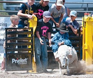 LON AUSTIN/CENTRAL OREGONIAN - Lucky Wood comes out of the shoot in the 6-7 year-old age group at this year's Crook County Fair mutton bustin' competition. Wood earned a red ribbon in the event.