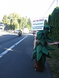 FILE PHOTO - Judith Martin borrows a tree costume from Friends of Trees in picketing the corner of Jennings Avenue and River Road, just a half mile south of the proposed development.