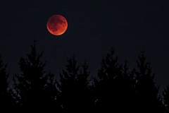 TRIBUNE PHOTO: DAVID BLAIR - Sunday evening's 'supermoon' eclipse turned the moon red as it rose in the east. This is the first 'blood moon' since 1982. It won't happen again until 2033.