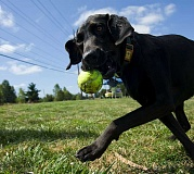 FILE PHOTO - Washington County Animal Services have removed their $2.49 convenience fee for online dog licensing, the department announced on Wednesday.