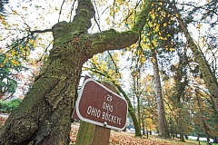 PORTLAND MEDIA GROUP: JONATHAN HOUSE  - Ohio's state tree as featured in the Grove of the States.