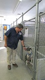 SPOTLIGHT FILE PHOTO - Dean Cox, former executive director of Columbia Humane Society, visits with a dog at the shelter. Cox was fired last week amid operational changes implemented by the organization's board members.