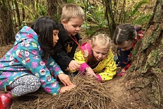 SUBMITTED PHOTO - Preschoolers explore the Tualatin Hills Nature Park as part of the Nature Kids preschool program.
