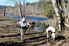 CONTRIBUTED PHOTO: MORGAN PARKS - The Clackamas River Basin Council's professional planting crew works at Milo McIver State Park in Estacada along Clackamas River.  The council will sponsor a work party in Eagle Creeek on Sat. Jan. 23.