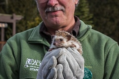 COURTESY OF THE OREGON ZOO/KATHY STREET - Oregon Zoo curator Michael Illig shows Velda, an African pygmy hedgehog, to visitors during the zoo's annual Hedgehog Day festivities. Velda did not see her shadow this morning, indicating an early spring may be in store.