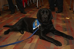 COURTESY OF PF&R - Portland Fire & Rescue introduced Zeus the arson dog during a press conference Tueaday morning, Feb. 2.