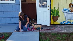 SUBMITTED - Becky Hansen paints paw prints on the sidewalk that leads to the grooming salon she operates.