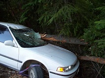 PHOTO COURTESY OF CCSO - This car, driven by Prineville resident Kylian Beitz, was impaled by a downed tree.