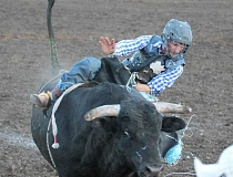 JIM BESEDA/MOLALLA PIONEER - Sid Britt of Hermiston starts looks for a place to land as he begins to lose his grip aboard Black Cloud during Saturday's Coastal Farm & Ranch Challenge of Champions Tour bull riding event at the Molalla rodeo grounds.