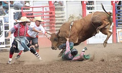 JIM BESEDA/MOLALLA PIONEER - Veteran bullfighters 'Dangerous' Dan Newman (left) and Rowdy Barry draw the attention of a bucking bull away from fallen rider Jeff Askey during the 2014 Molala Buckeroo Rodeo.