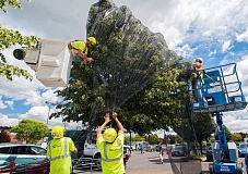 SPOKESMAN FILE PHOTO: - European linden trees improperly applied with pesticides were the cause of the death of some 50,000 bees in Wilsonville in 2013. Here, workers cover the trees to prevent further harm to local pollinators.