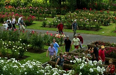 PORTLAND TRIBUNE FILE PHOTO - The International Rose Test Garden is one of the most popular features at Washington Park. Parks bureau leaders are updating the Master Plan to chart the park's future.