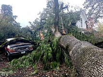 TRIBUNE PHOTO: JOHN SCHRAG - A large oak tree succumbed to strong winds Saturday afternoon, damaging a truck and residence on Cedar Street in Forest Grove.