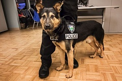 TIMES PHOTO: JONATHAN HOUSE - Tony, Tualatin's new police dog, met members of the public and the Tualatin City Council at the Juanita Pohl Center on Monday.