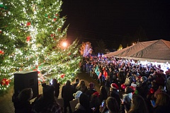 POST PHOTO: JOSH KULLA - An enthusiastic crowd greets the lighting of Sandy's Christmas tree Friday evening in Centennial Plaza.