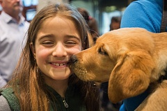 OUTLOOK PHOTO: JOSH KULLA - Calliope Sanft, 9, stopped by the Guide Dogs For The Blind event during a vacation from New York City with her parents. Here, she gets a big kiss from one of the six new puppies.