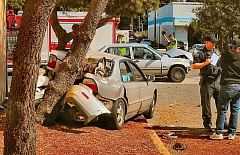 DAVID F. ASHTON - Police commented that the Honda must have been traveling pretty fast, to have developed enough momentum on the short street to plant his cars rear end so deeply into the trees trunk.