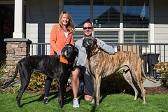 TRIBUNE PHOTO: JONATHAN HOUSE - Oregon State football coach Gary Andersen (right) and wife Stacey share their Corvallis home with pets Aggie (left) and Blue, who areGreat Dane/English Mastiff mixes - 'mutts,' as the coach affectionately refers to them.