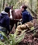 SUBMITTED PHOTO - Firefighter Andrea Tardio (right) and a Lake Oswego Hunt employee work to help calm Denver while others prepare a clear pathway to get the horse out of a ravine near Iron Mountain Boulevard.