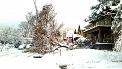KATIE LEONARD - The heavy snowfall brought down this tree and power lines in Brooklyn near S.E. 13th Avenue and Haig Street.