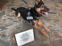 COURTESY OF THE TUALATIN POLICE DEPARTMENT - Tualatin Police K-9 Tony is now a certified narcotics detection dog, as recognized by the Oregon Police Canine Association.