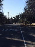CONTRIBUTED PHOTO - The snapped tree is about 60 to 100 feet long.